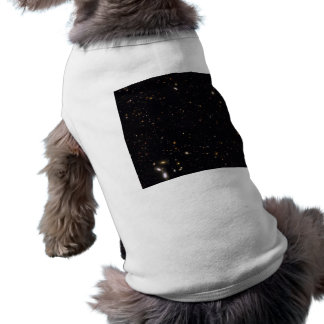 Galaxy history revealed by the Hubble GOODS-ERS2 Pet Clothing