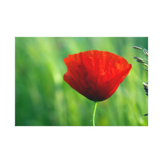 Gallery canvas printing - poppy