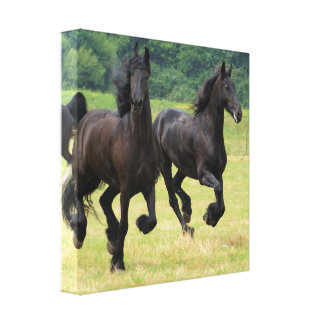 Galloping Friesian Horses Canvas Print