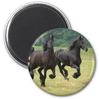 Galloping Friesian Horses  Magnet Magnet