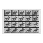 Galloping Horse, plate 628 from 'Animal Locomotion Print