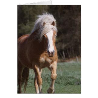 Galloping Palomino  Greeting Card