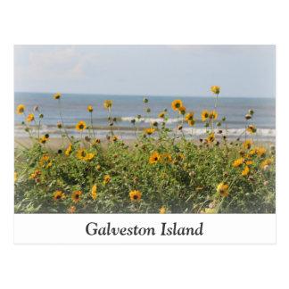 Galveston Island Beach Flowers Postcard