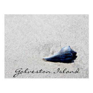 Galveston Island Sea Shell Postcard