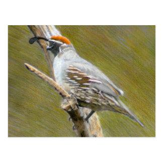 Gambel's Quail fine art nature postcard