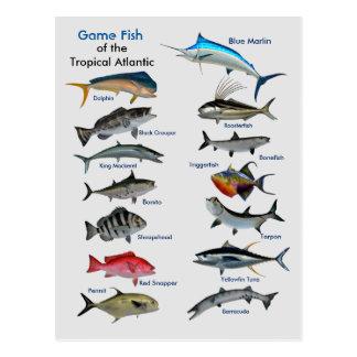Game Fish of the Tropical Atlantic Postcard