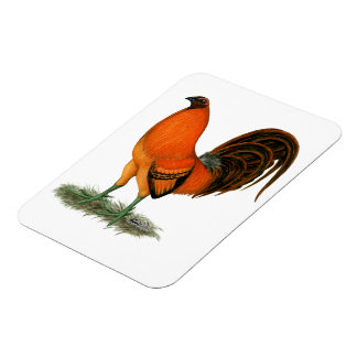Gamecock Ginger Red Rooster Magnet
