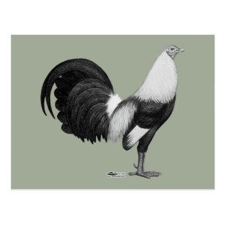 Gamecock Grey Duckwing Postcard