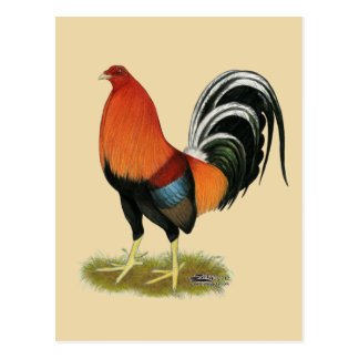 Gamecock Wheaten Rooster Postcard