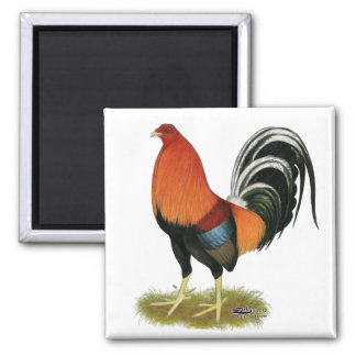 Gamecock Wheaten Rooster Square Magnet
