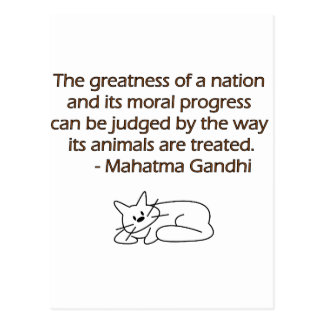 Gandhi Animals Quote with Cat Postcard