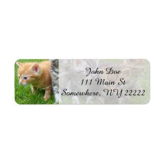 Gang of Adorable Kittens Return Address Label