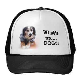 Gangsta Dog Wearing Hoodie Mesh Hats