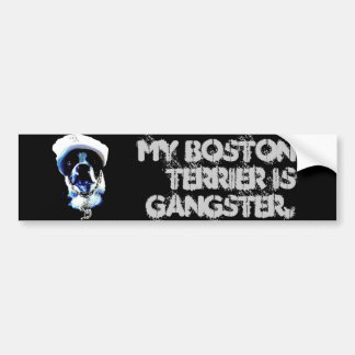 Gangster Boston Terrier Bumper Sticker