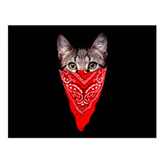 gangster cat - bandana cat - cat gang postcard