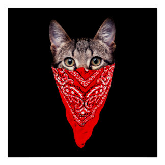 gangster cat - bandana cat - cat gang poster