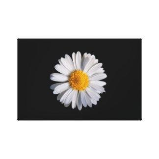 Gänseblümchen Canvas Print