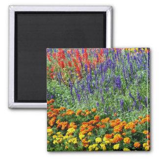 Garden Beauty Flower Photography Magnet