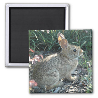 Garden Bunny Square Magnet