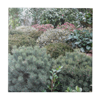 Garden centre with selection of nursery plants tile