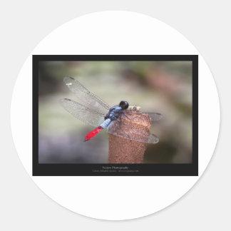 Garden critters - Dragonfly 004 Classic Round Sticker