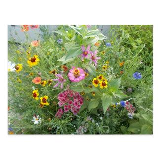 Garden flowers as daisy, zinnia, poppy, cornflower postcard