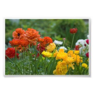 Garden flowers photo print