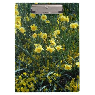 Garden full of yellow daffodils clipboard