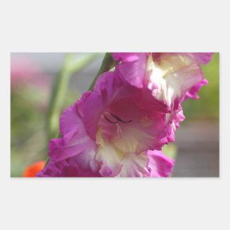 Garden gladiolus (Gladiolus x hortulanus)