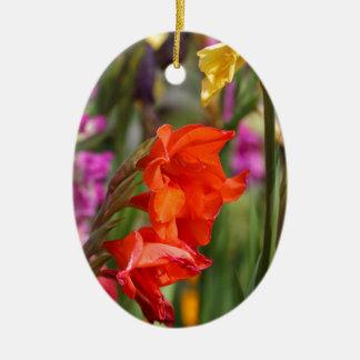 Garden gladiolus (Gladiolus x hortulanus) Ceramic Oval Ornament