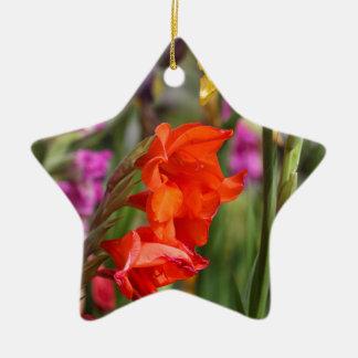 Garden gladiolus (Gladiolus x hortulanus) Ceramic Star Ornament