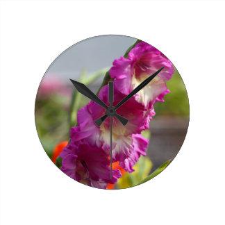 Garden gladiolus (Gladiolus x hortulanus) Clocks