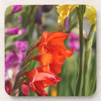 Garden gladiolus (Gladiolus x hortulanus) Coaster