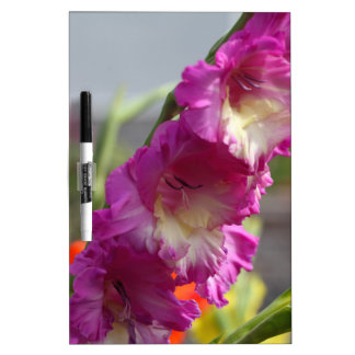 Garden gladiolus (Gladiolus x hortulanus) Dry Erase White Board