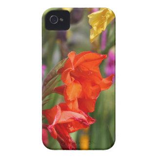 Garden gladiolus (Gladiolus x hortulanus) iPhone 4 Covers