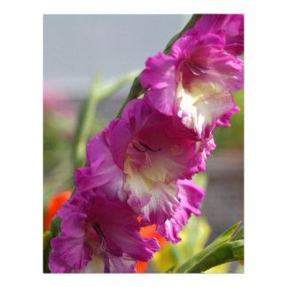 Garden gladiolus (Gladiolus x hortulanus) Letterhead