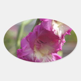 Garden gladiolus (Gladiolus x hortulanus) Oval Sticker