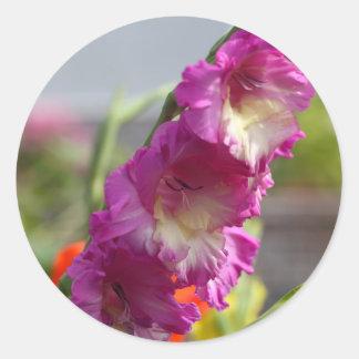 Garden gladiolus (Gladiolus x hortulanus) Round Sticker