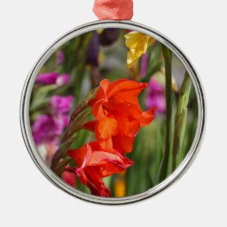 Garden gladiolus (Gladiolus x hortulanus) Silver-Colored Round Ornament