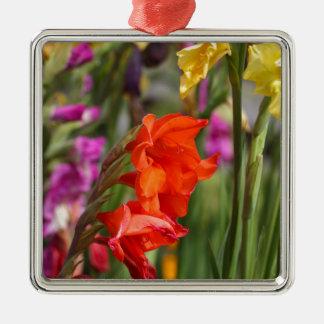 Garden gladiolus (Gladiolus x hortulanus) Silver-Colored Square Ornament