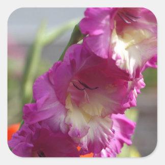 Garden gladiolus (Gladiolus x hortulanus) Square Sticker