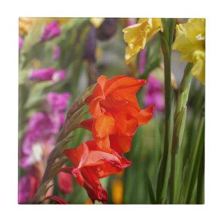 Garden gladiolus (Gladiolus x hortulanus) Tile