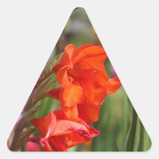 Garden gladiolus (Gladiolus x hortulanus) Triangle Sticker
