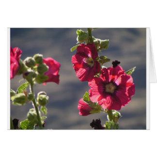 Garden Hollyhocks in a mountain valley Card