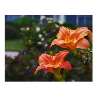 Garden in Orange Postcard