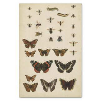 Garden Insects by Vision Studio Tissue Paper