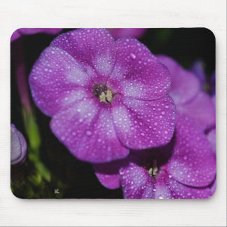 Garden Laura Phlox Flowers-007 Mouse Pad
