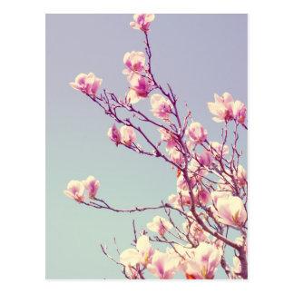 Garden Magnolias Postcard