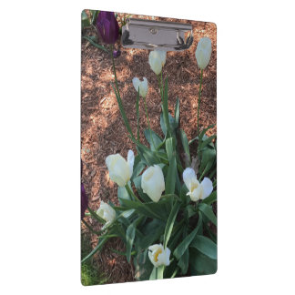 Garden of snow white tulip flowers clipboard