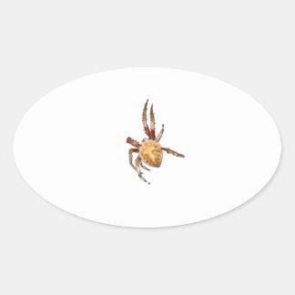 Garden Orb Weaver Spider Oval Sticker